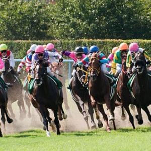 マーメイドステークス2019 出走予定馬のラップギアと血統データ傾向