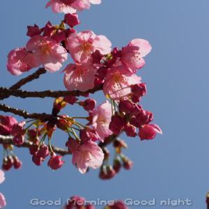 桜16~今日の一枚~
