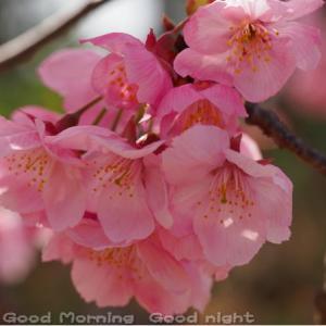 桜18~今日の一枚~