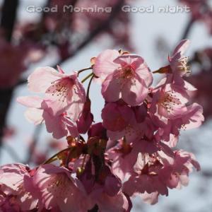 桜19~今日の一枚~