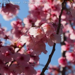 桜22~今日の一枚~