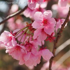 桜23~今日の一枚~