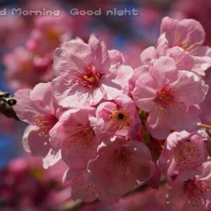 桜24~今日の一枚~