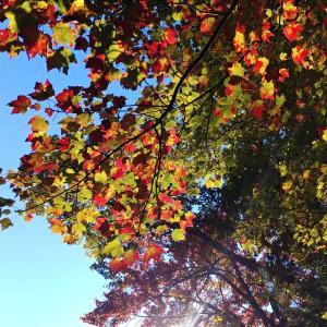 庭の紅葉と海うなぎの話