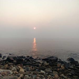 朝の海岸通の散歩🌅