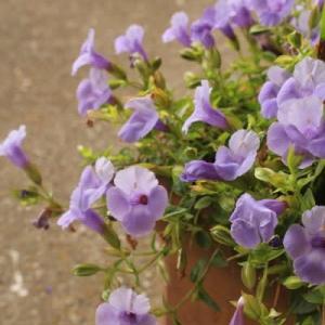 お花がかわいい~!