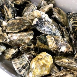 北海道紋別から届いた生牡蠣は、蒸して食べるといいようで・・