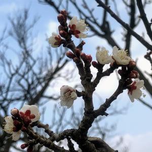 体のチェックもかねて、春を探して裏山へお散歩。そこには・・