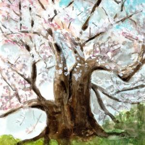 醍醐桜満開!!