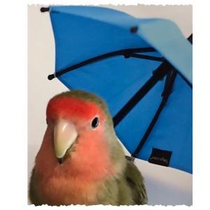 Singin' in the Rain ♪