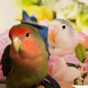 鳥についてこれるか?♪