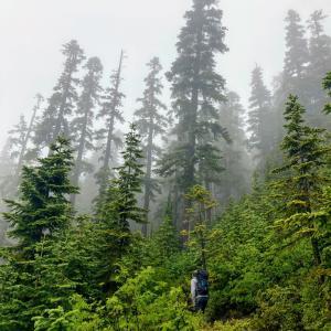久々にマウンテニアズ・ハイク - Mt. Margaret Trail