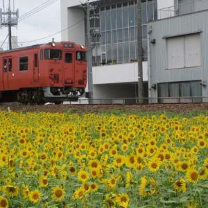 ひまわり畑とローカル列車