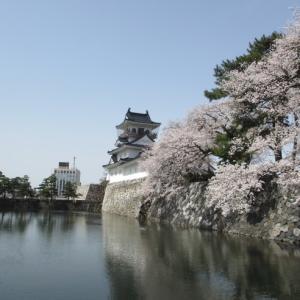 桜 振り返り写真(富山城址)
