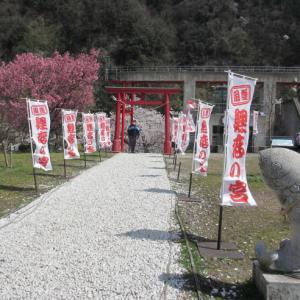 桜 振り返り写真(庄川水記念公園)