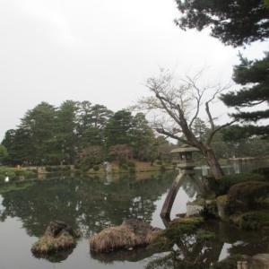 桜 振り返り写真(兼六園)