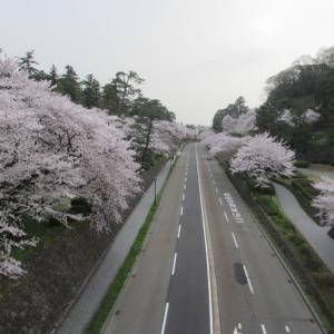 桜 振り返り写真(金沢城公園)