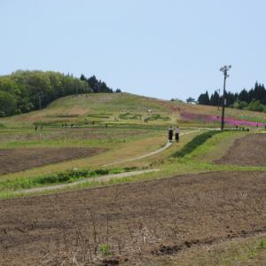 水仙畑と菜の花畑