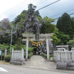 初めて行った神社でヤマフジを堪能