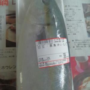 生まれて初めて魚を捌いた!