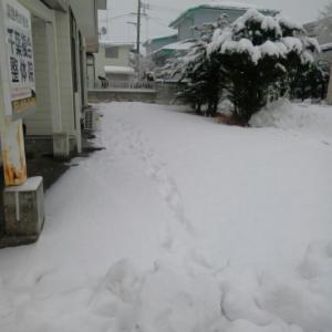これから再度雪かき!