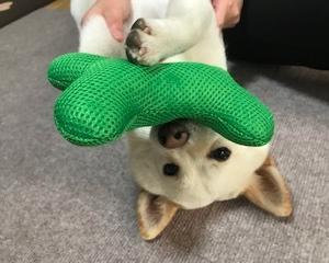 ハナのおもちゃ