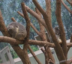 《鹿児島旅行》鹿児島市平川動物公園に行ったよ