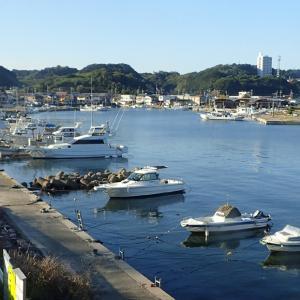 知多半島 & 外猫 & 関東出張。  2021年10月16日(土)