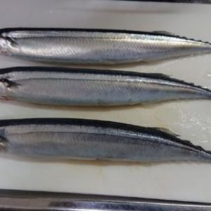 「100円以下の秋刀魚」 #岩手 #三陸 #秋刀魚 #塩焼き #魚