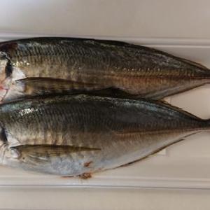鯵の塩焼き #料理 #魚 #鯵 #塩焼き