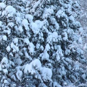 冷たい雪だね