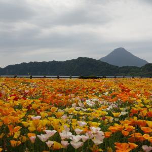 2019.4.28 開聞岳 円錐形美しき薩摩富士、海を眺めながら歩く旅