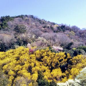 ●●★花の山