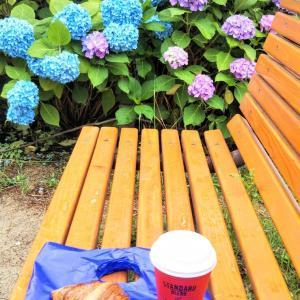 ●●★★アジサイのベンチ in 夙川