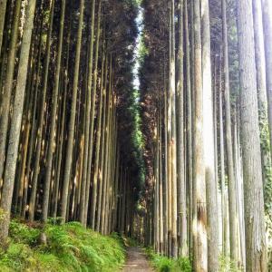 ●●★京都一周トレイル 西山コースの一部?