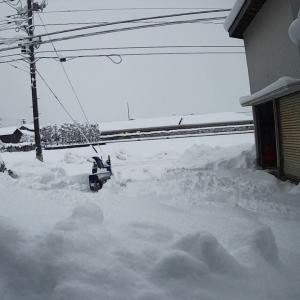 1月3日(日) 今日も雪降ってます