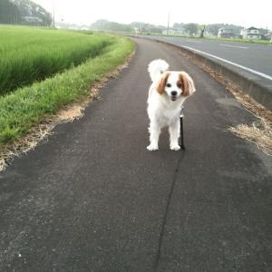日曜日の朝の過ごし方と愛犬と散歩