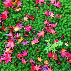 京都&大阪② 嵐山・嵯峨野を散策、感動!「厭離庵の散り紅葉」、夜は祇園の割烹居酒屋「河道」で