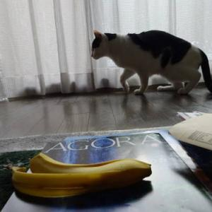 恐怖のバナナ