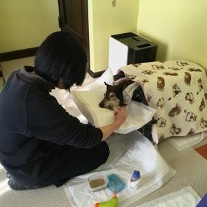 介護期グッズ:飼い主の健康維持道具