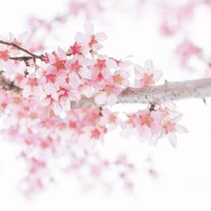 春グッズ満載!近所のDAISOが大きくなって再オープン♪