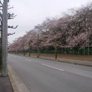 桜を見に行きたいね