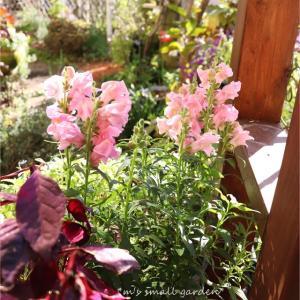 晴れた日の庭(=^・ェ・^=)//*外置き棚の補修