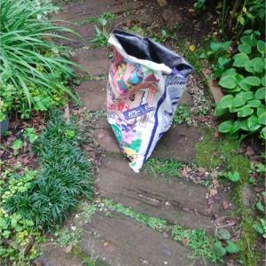 小庭改造を始めました!《ノリウツギ・リトルホイップ開花》