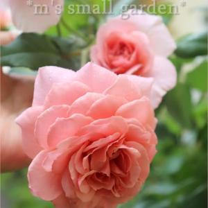 薔薇と百合と紫陽花*やっぱり会いたい