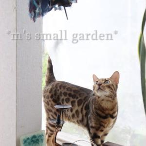 ミソハギが咲いて*管理しやすい庭に一歩ずつ
