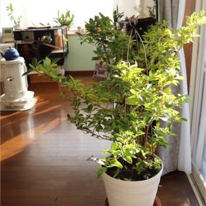幸せが舞い降りる*室内の植物たち