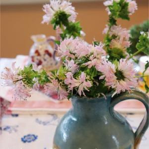おうちの中からこんにちは*モナルダ・うさサボ・サンスベリアの花*