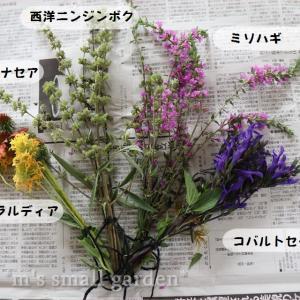 庭の花をドライにしてみる*夏だから簡単!
