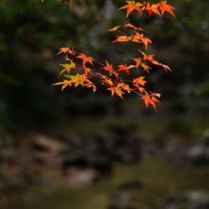 正歴寺から談山神社へ